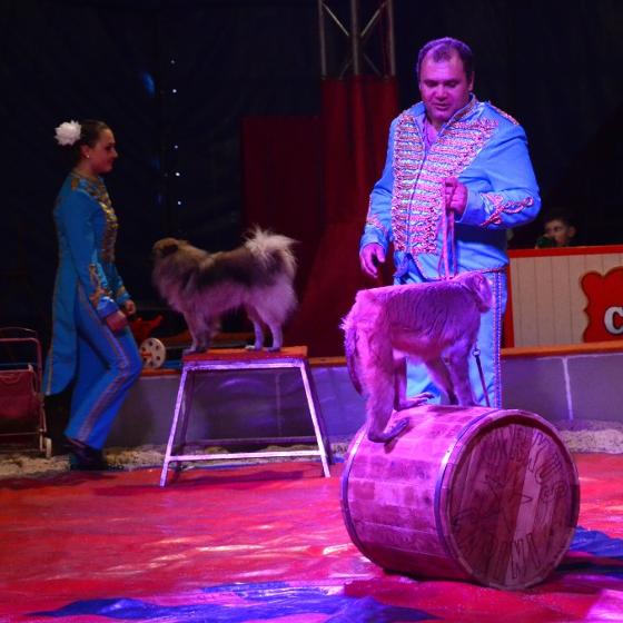 Carini<BR>Žižkovské šapitó<BR>Artistické cirkusové vystoupení